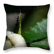 Strive Hard  Throw Pillow