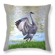 Strutting Sandhill Crane Throw Pillow