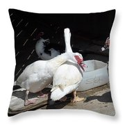 Stubbs On Lanzarote Throw Pillow