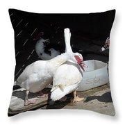 Stubbs On Lanzarote Throw Pillow