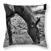 Study Of A Horse Throw Pillow
