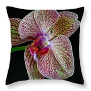 Study Of An Orchid 2 Throw Pillow