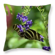 Stunning Black And White Zebra Butterfly In The Spring Throw Pillow
