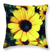 Stunning Black Eyed Susan  Throw Pillow