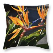 Stunning Bunch Of Flowers With Bright Orange Petals  Throw Pillow