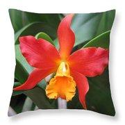 Stunning Cattleya Throw Pillow