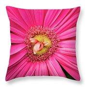 Stunning Gerbera Throw Pillow