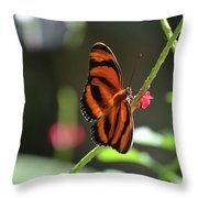 Stunning Little Orange Oak Tiger Butterfly In Nature Throw Pillow