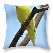 Stunning Little Yellow Budgie Parakeet In Nature Throw Pillow