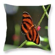 Stunning Oak Tiger Butterfly Resting On Flowers Throw Pillow