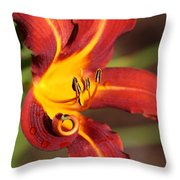 Stylistic Daylily Throw Pillow