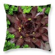 Succulent 4 Throw Pillow