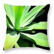 Succulent Agave Art By Sharon Cummings Throw Pillow