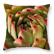 Succulent Petals Throw Pillow