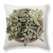 Succulent Plant From The Top Throw Pillow