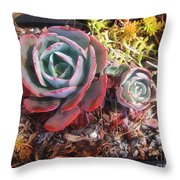 Succulent Plants. Multi-colored Throw Pillow