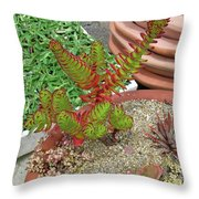Suculent Illusion Throw Pillow