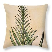 Sugar Cane, 1597 Throw Pillow