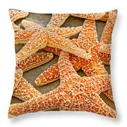 Sugar Starfish Throw Pillow