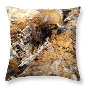 Sugarloaf Snail Throw Pillow
