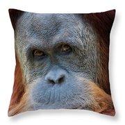 Sumatra Orangutan Portrait Throw Pillow