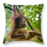 Sumatran Orangutan Pongo Abelii Baby Throw Pillow by Suzi Eszterhas