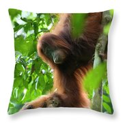 Sumatran Orangutan Pongo Abelii Two Throw Pillow