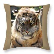 Sumatran Tiger-1440 Throw Pillow