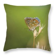 Summer, Adonis Blue Butterfly, Polyommatus Bellargus Basking In Sun. Andalusia, Spain. Throw Pillow