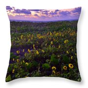 Summer Beach Daisies 1 Throw Pillow