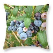 Summer Blueberries Throw Pillow