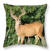 Summer Buck Throw Pillow