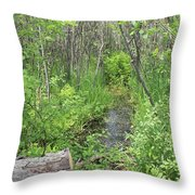 Summer Creek At Orion's Lake In Mi Throw Pillow