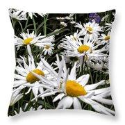 Daisies Galore Throw Pillow