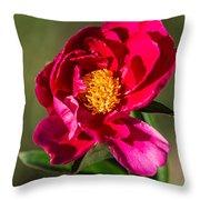 Summer Flower II Throw Pillow