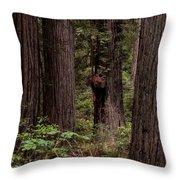 Summer In Redwood National Park Vertical Throw Pillow
