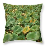 Summer Palace Lotus Pond Throw Pillow