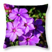 Summer Purple Phlox Throw Pillow