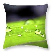 Summer Rain 2 Throw Pillow