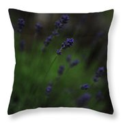 Summer Scent Of Lavender Throw Pillow