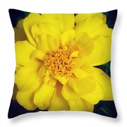Summer Solstice Marigold Throw Pillow