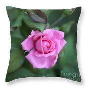 Summer Sweet Rose Throw Pillow