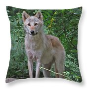Summer Wolf Throw Pillow