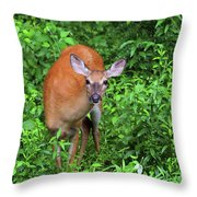 Summertime Visitor Throw Pillow
