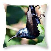 Sun Bird Acrobatics Throw Pillow
