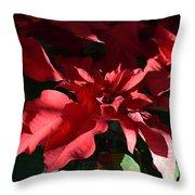Sun Blushed Poinsettia  Throw Pillow