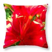 Sun Dappled Lily Throw Pillow