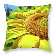 Sun Flower Art Sunlit Sunflower Giclee Prints Baslee Troutman Throw Pillow
