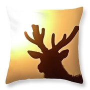 Sun Glaring Over A Bull Elk Throw Pillow