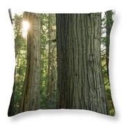Sun In The Cedars Throw Pillow
